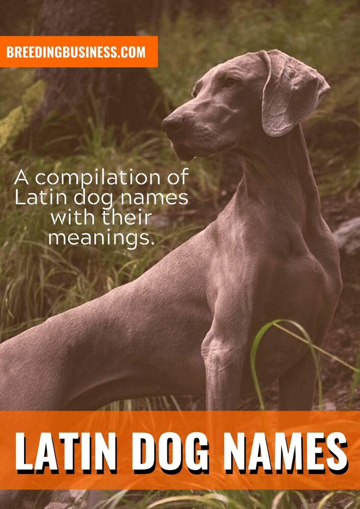 latin dog names