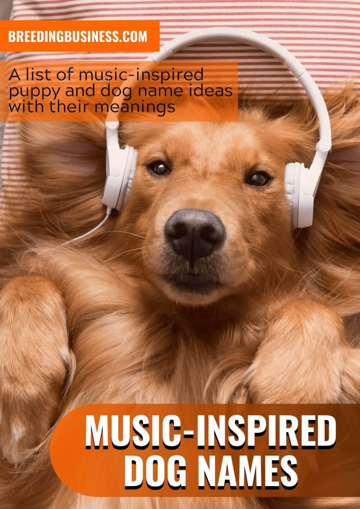 music-inspired dog names