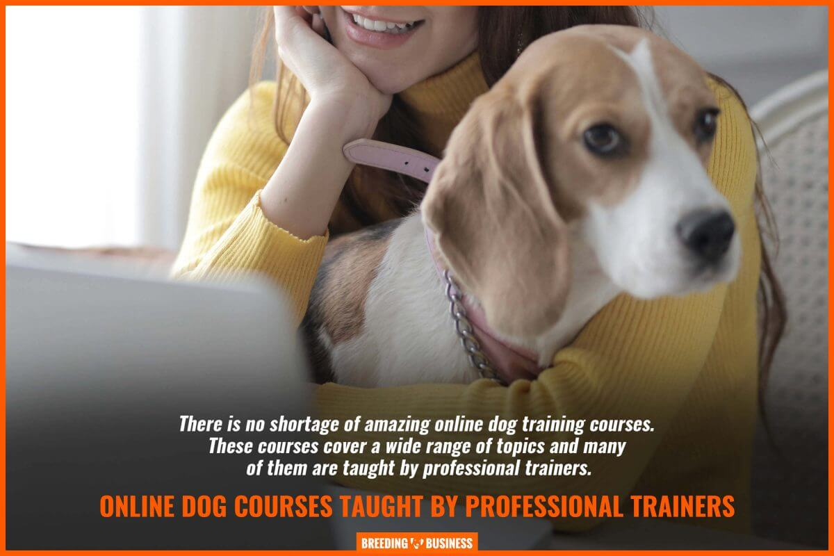 online dog courses taught by professional trainers