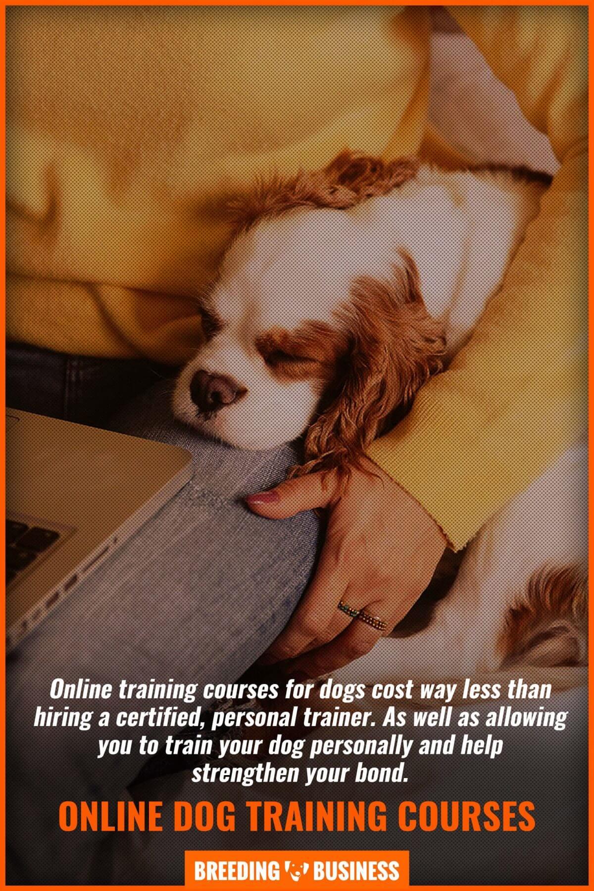 online dog training courses