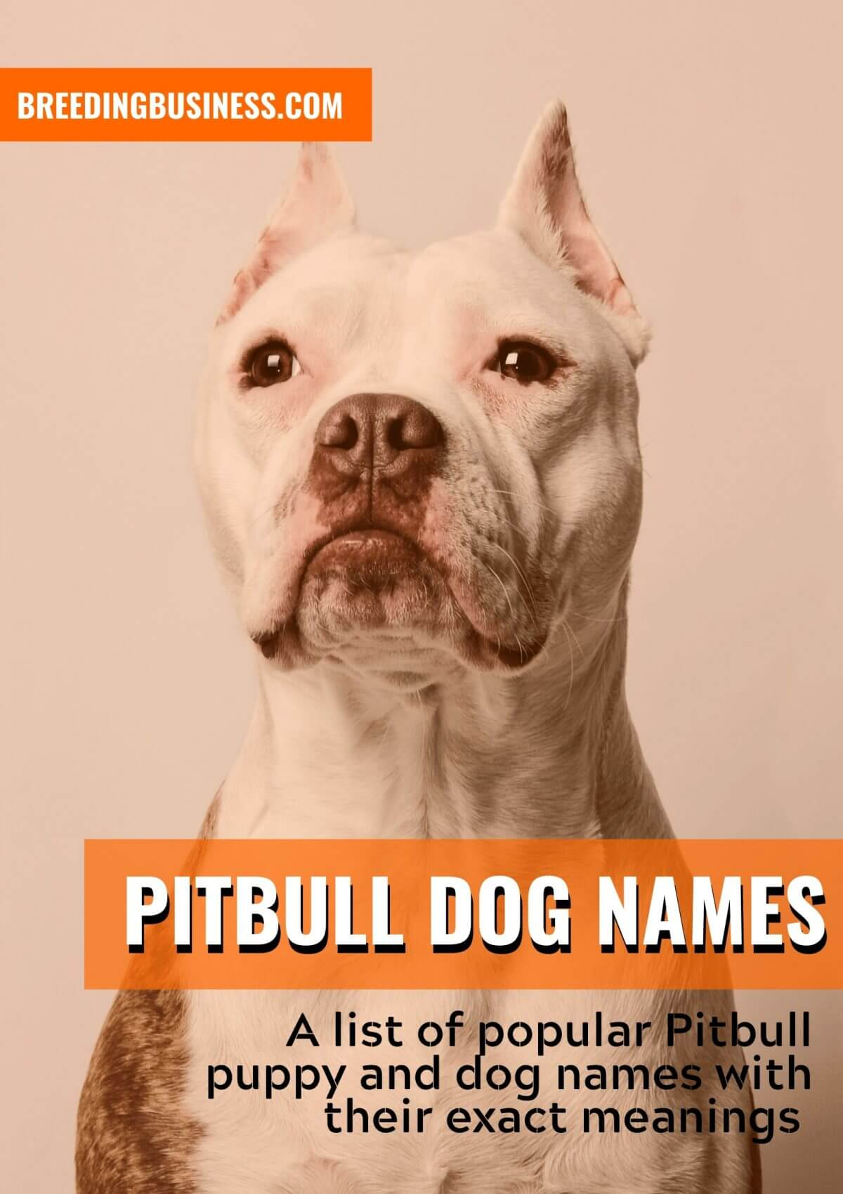 List of the best pitbull dog names!