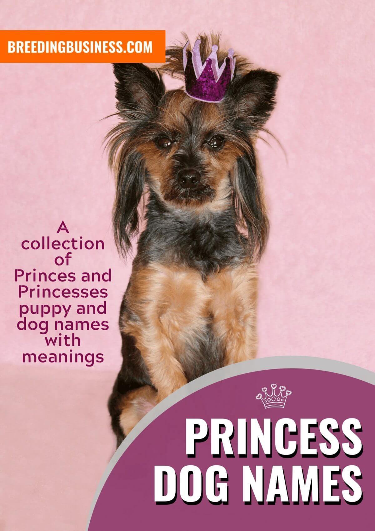 princely dog names