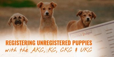 registering unregistered puppies