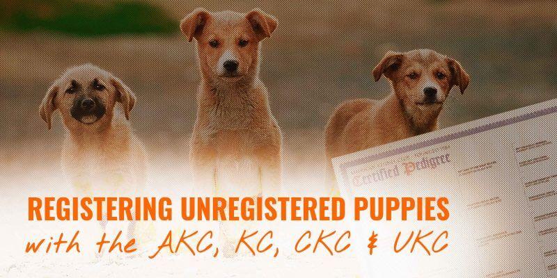 registering unregistered puppies