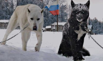 100+ Russian Dog Names – the Coolest Soviet Puppy Name Ideas!