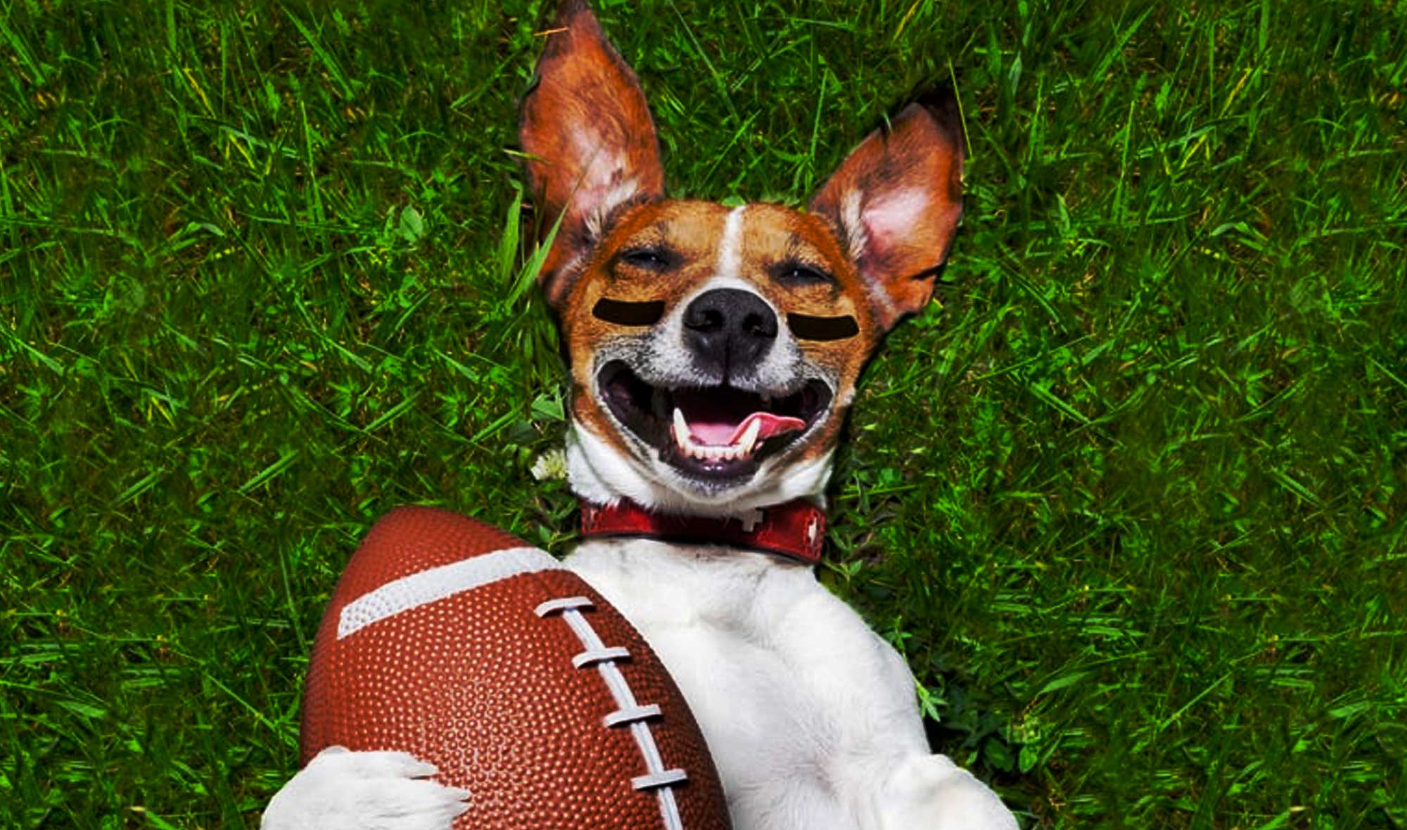 80+ Sport-Inspired Dog Names for Sporty Puppies