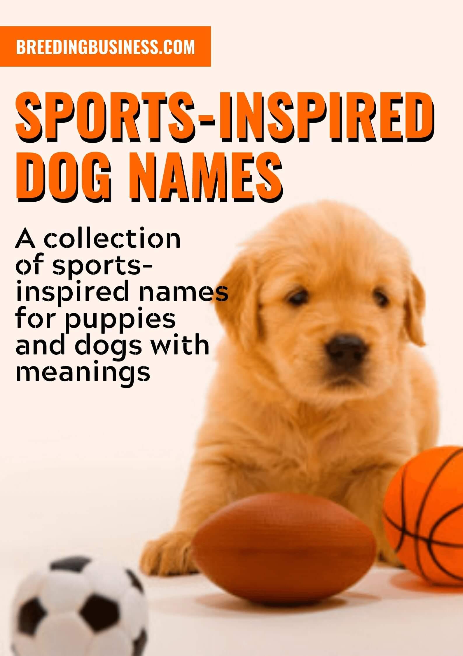 Sport-Inspired Dog Names