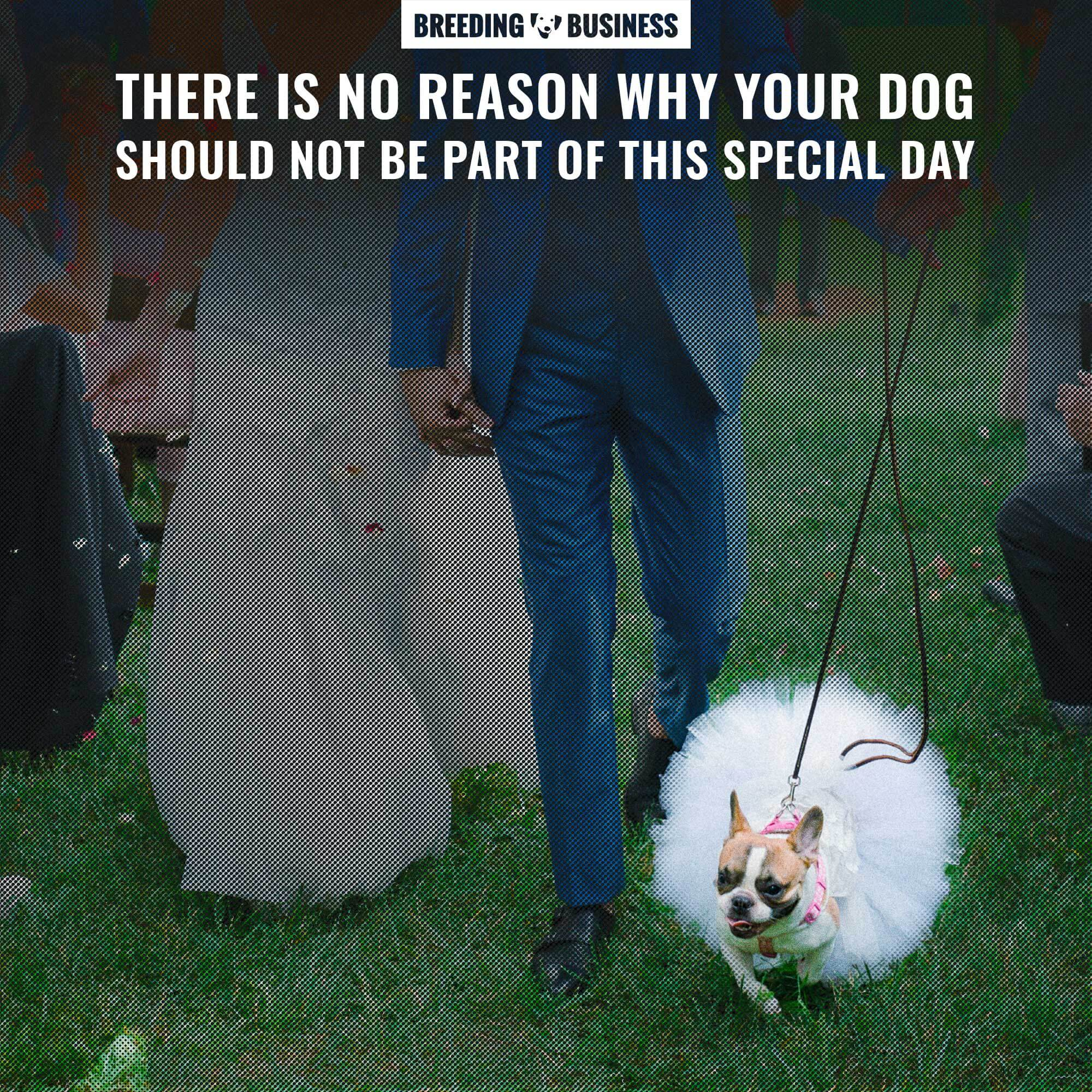 Dress up your dog for your wedding day!