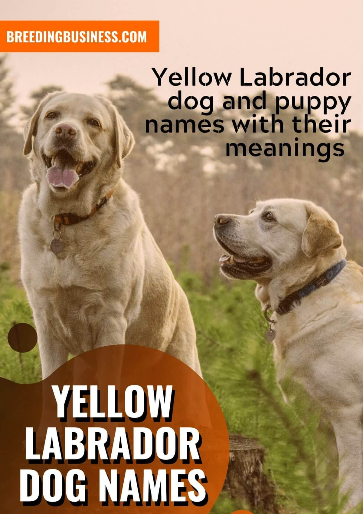 The best Labrador dog names!