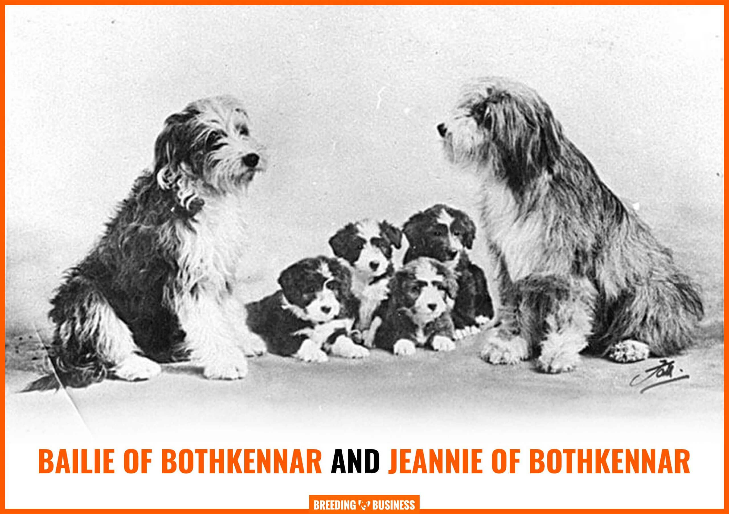 Bearded Collie History – Bailie of Bothkennar and Jeannie of Bothkennar