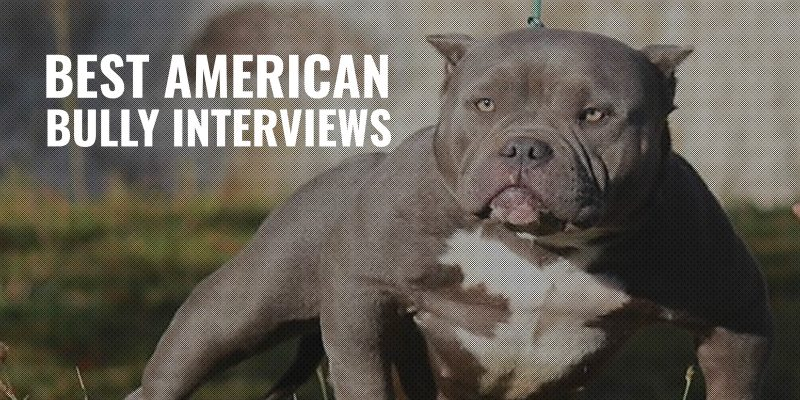25 Best American Bully Interviews –Text, Video & Podcasts