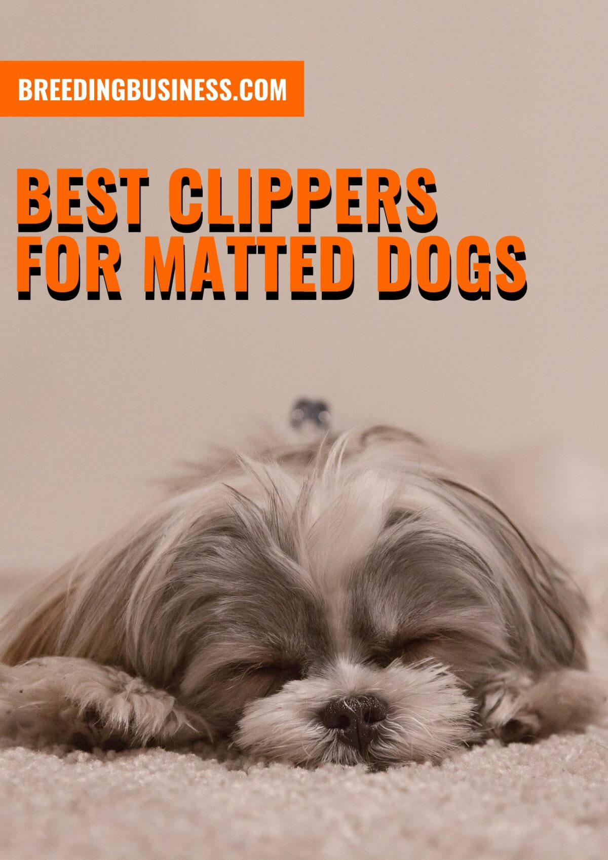 Reviews: Top Clippers for Matted Dogs