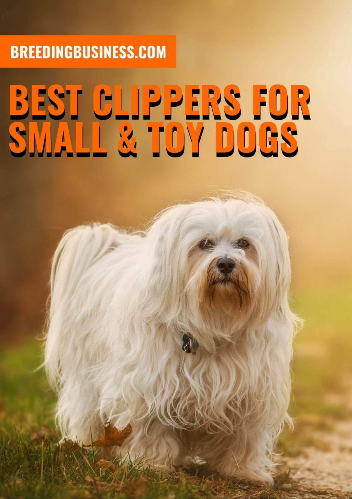 Best Clippers for Small & Toy Dogs – Buying Guide, Brands and Reviews