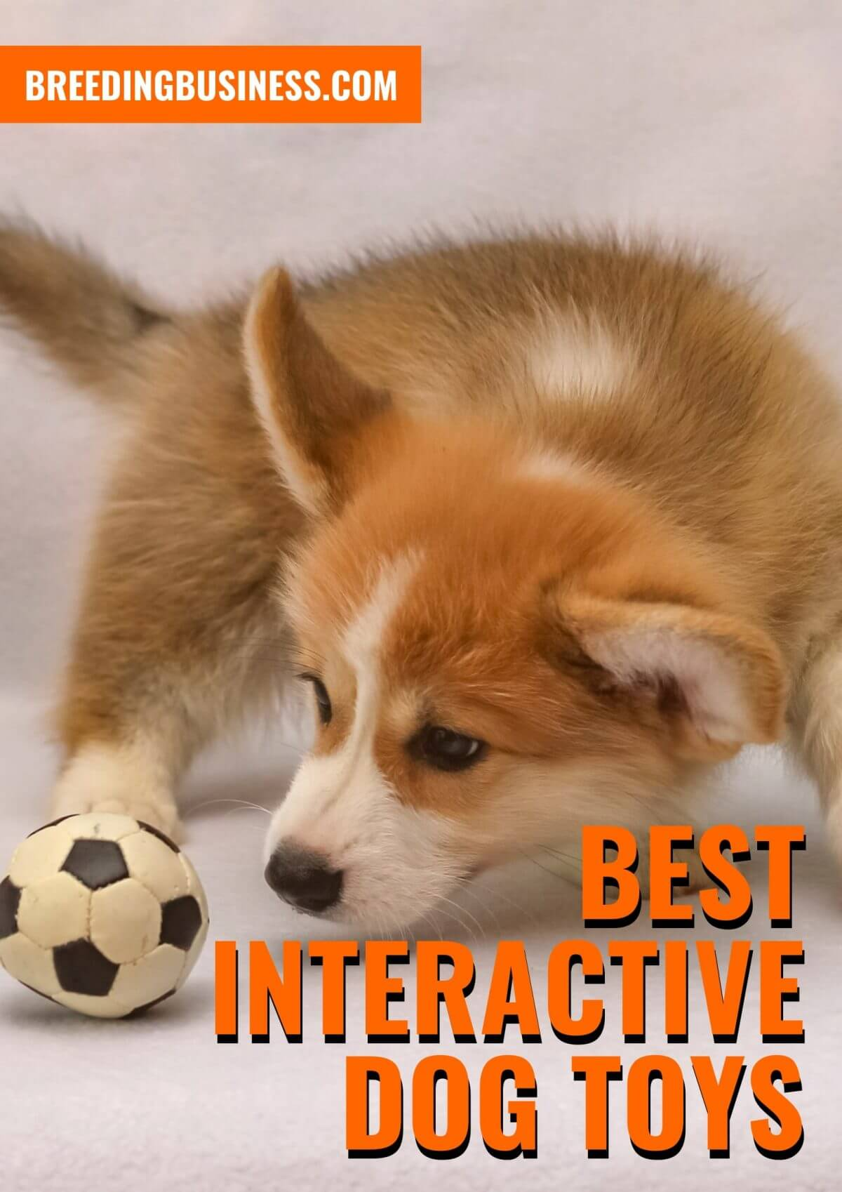 List of the Top Interactive Dog Toys