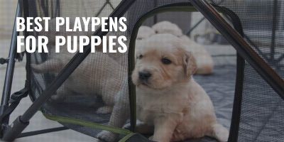 10 Best Playpens for Puppies – Comfort, Size & Reviews