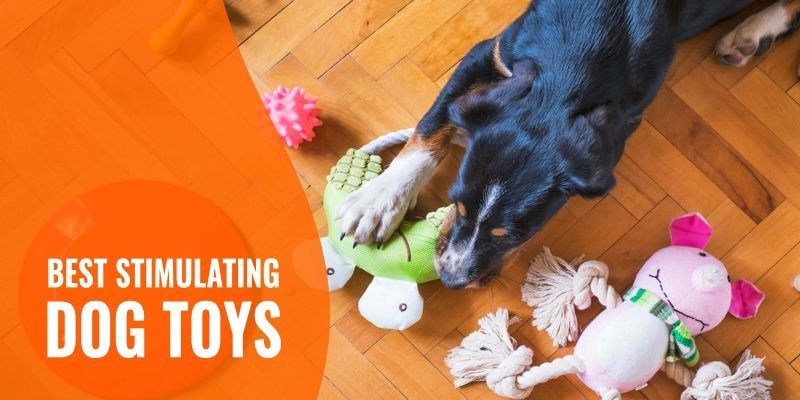 best stimulating dog toys