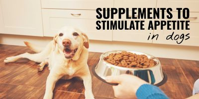 7 Best Supplements to Stimulate Appetite in Dogs