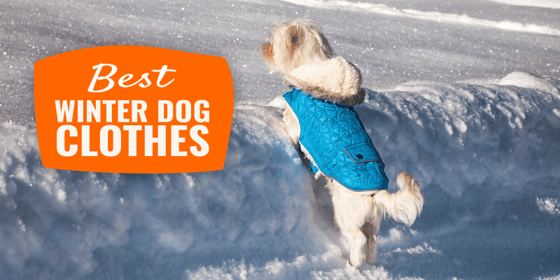 Best Winter Dog Clothes – Buying Guide, Top Tips & Reviews
