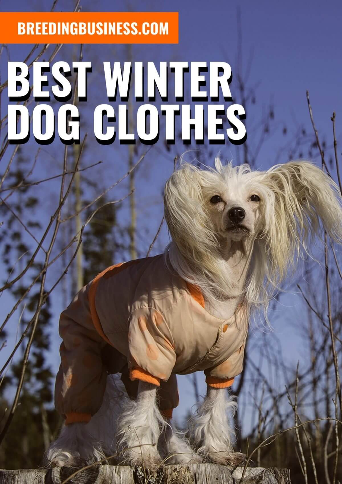 Reviews: Best Winter Dog Clothes