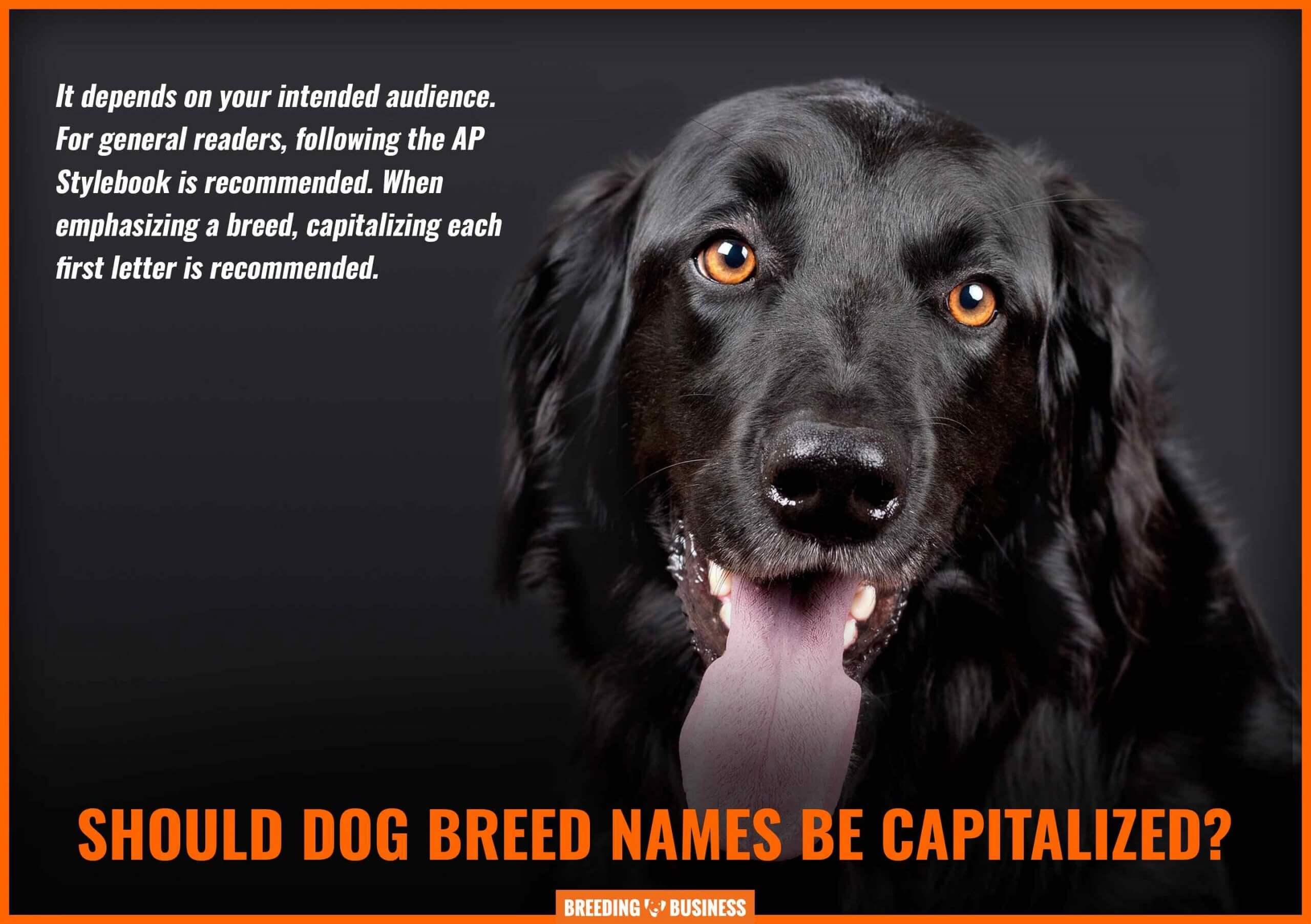 capitalization of dog breed names