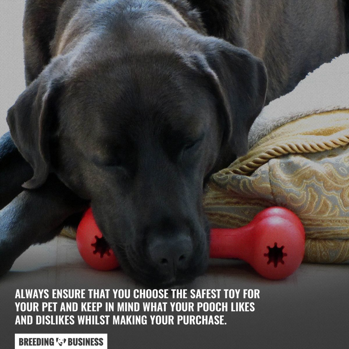 choosing a stimulating toy for your dog