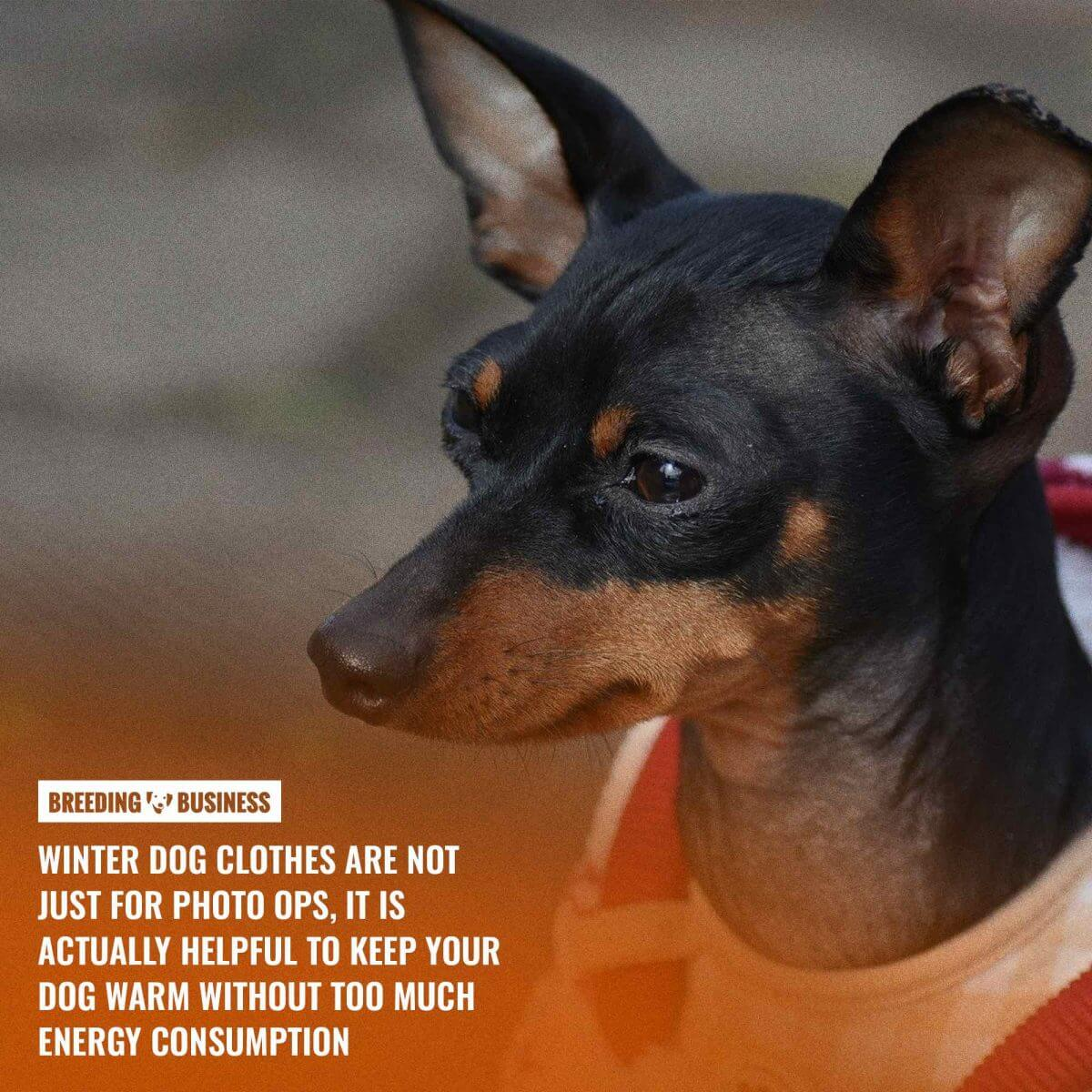 How to choose dog winter clothes?