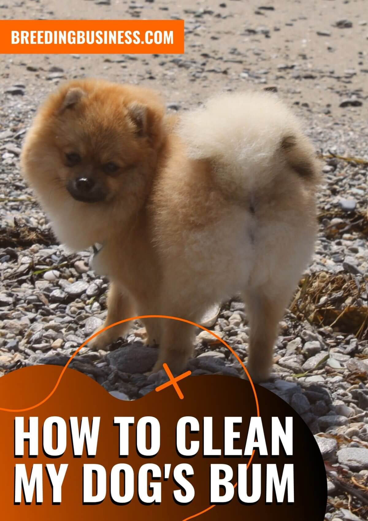 How To Clean a Dog's Bum