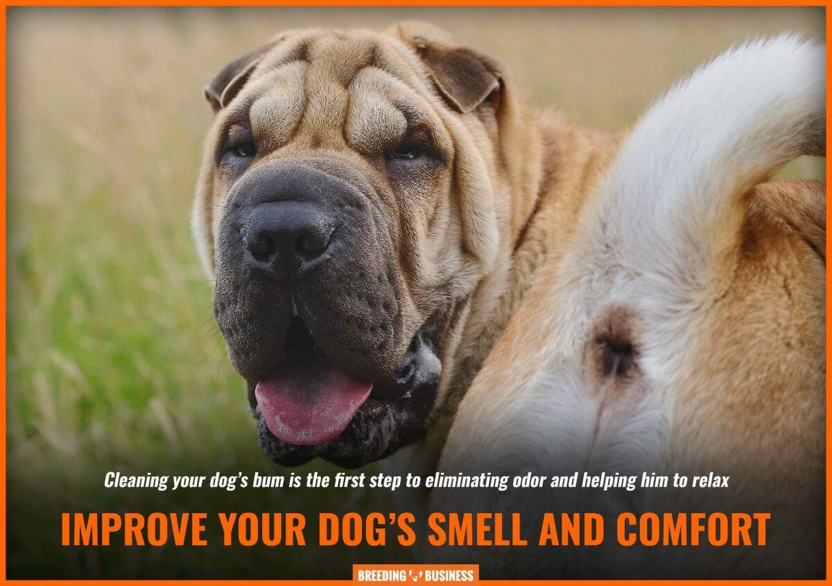 A foul smell can originate from a dog's dirty bum.