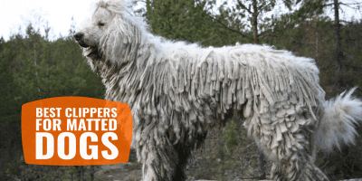 7 Best Clippers for Matted Dogs