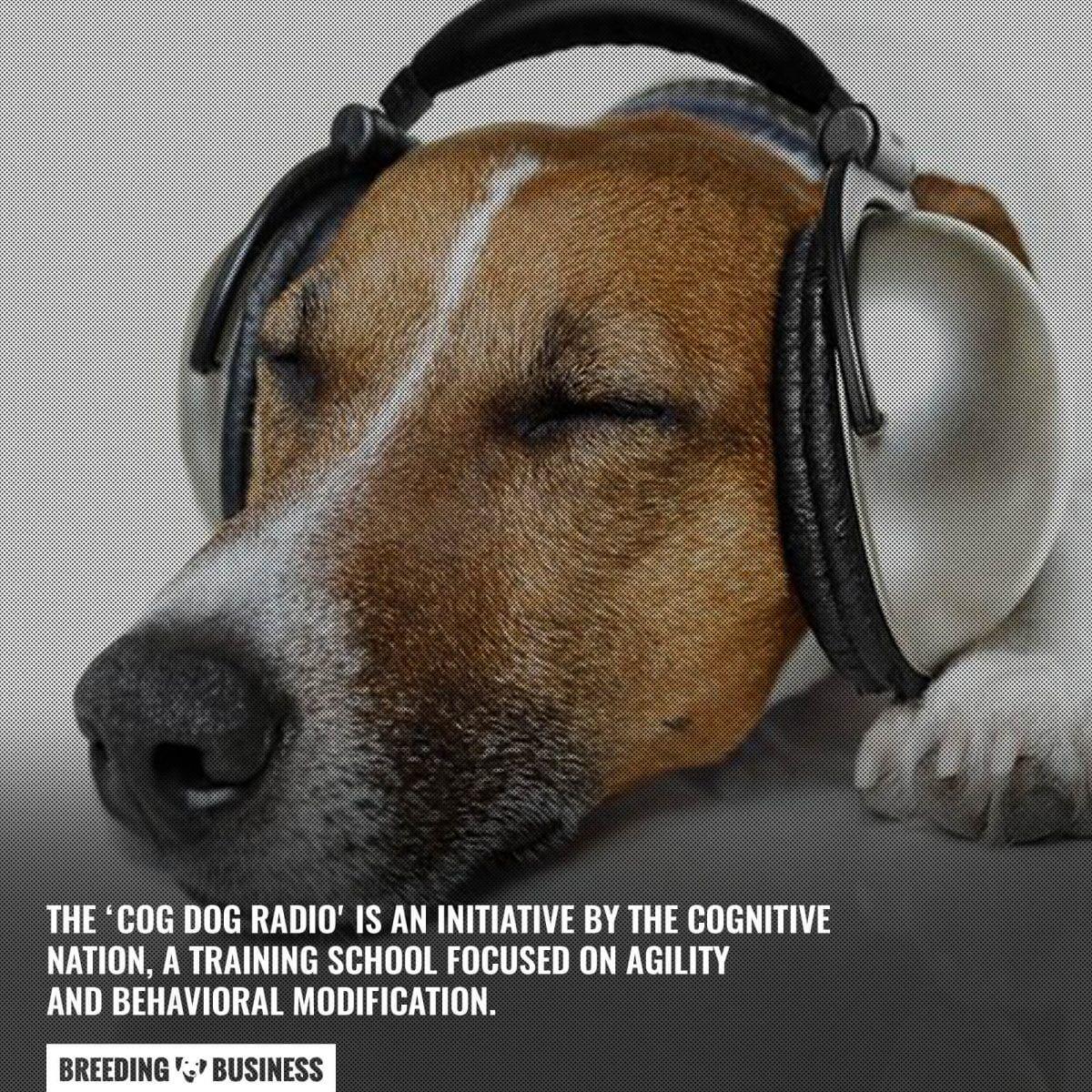 cog dog radio