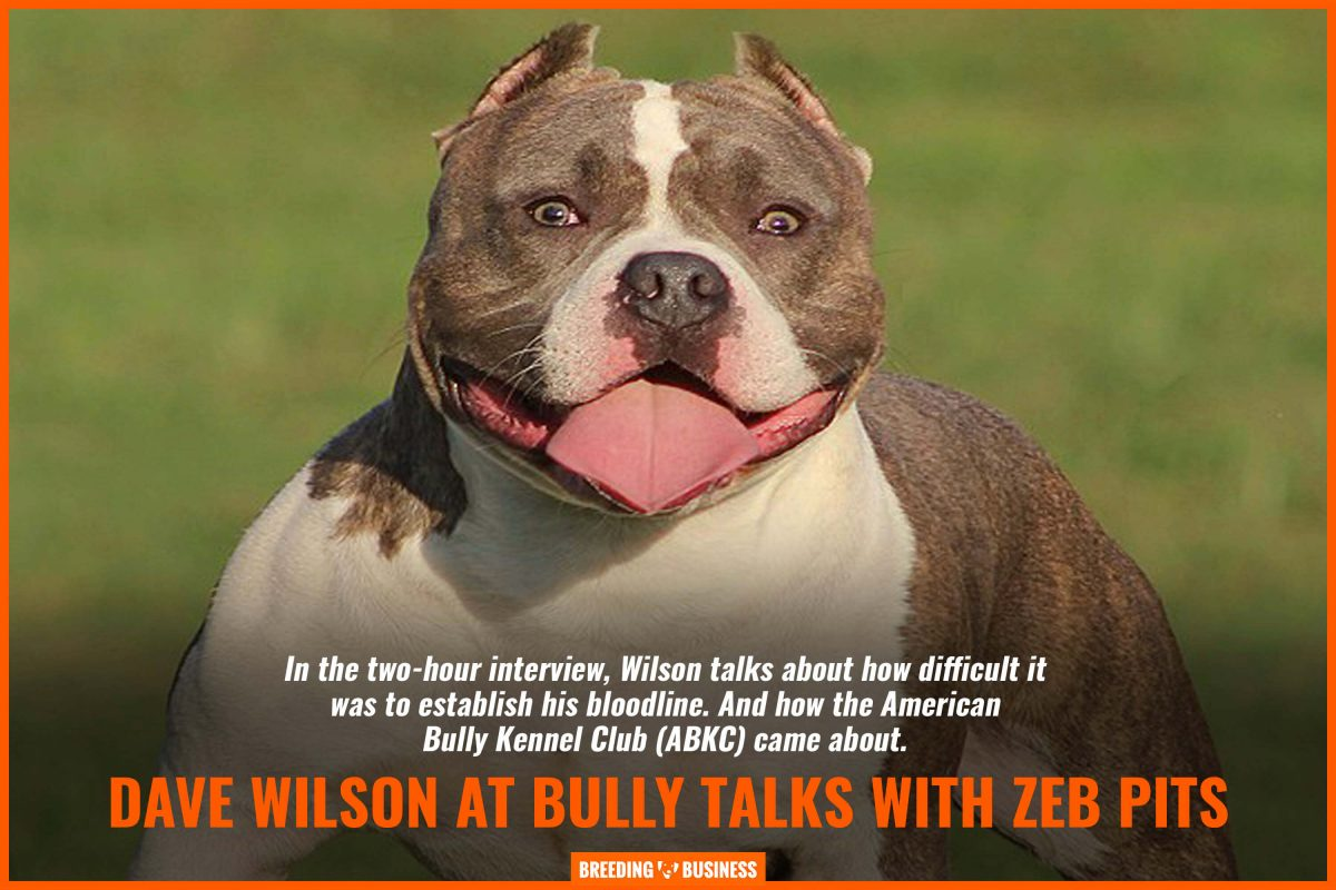 dave wilson at bully talks with zeb pits