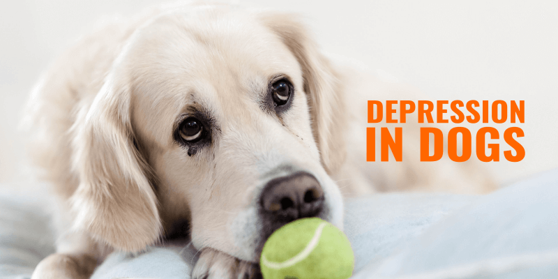 Depression In Dogs – Causes, Symptoms, Diagnosis & Treatments