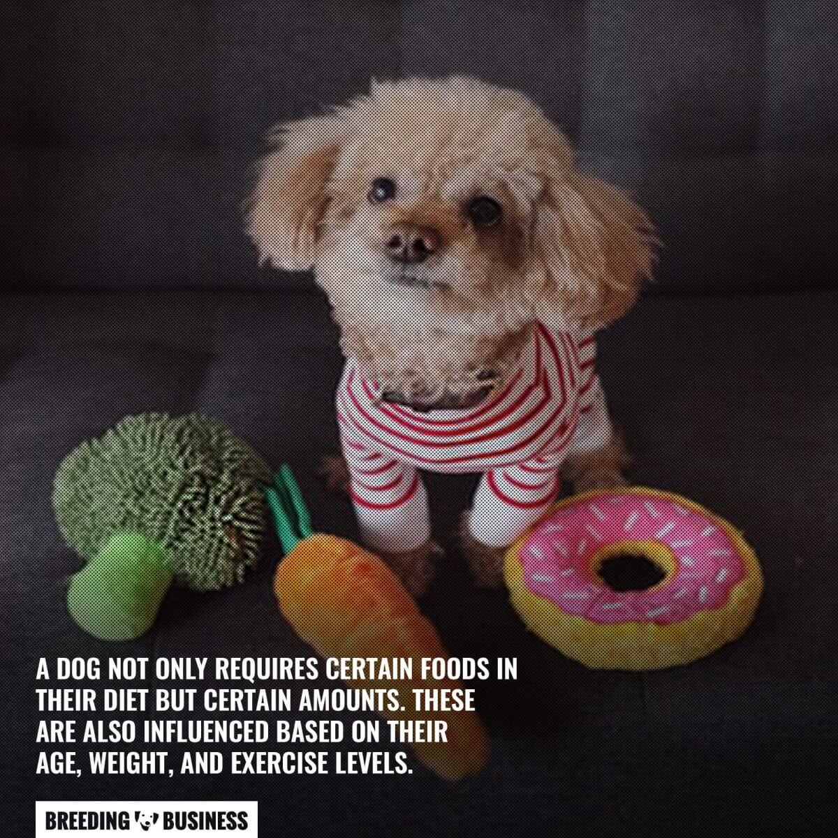 Diet is a pillar of canine health.