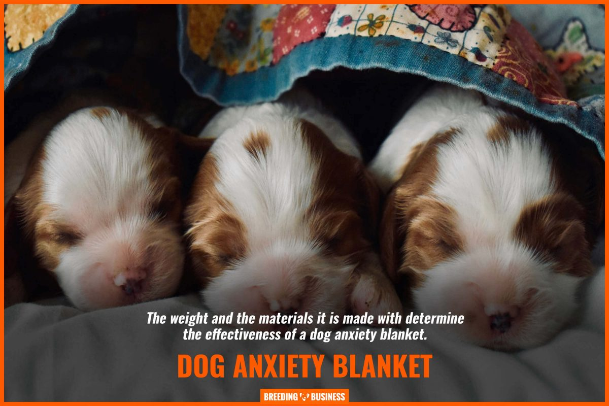 dog anxiety blanket