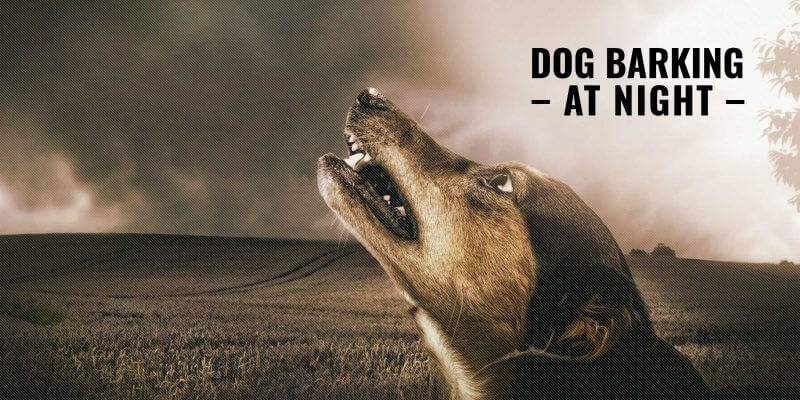Dog Barking at Night – Reasons, Prevention, Law, Training & Solutions