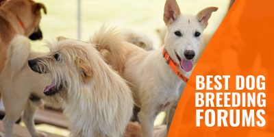 List of the Best Dog Breeding Forums