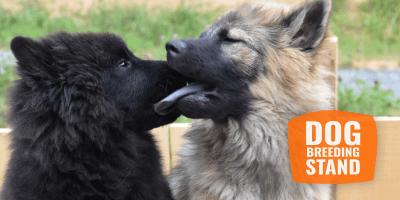 dog breeding stands