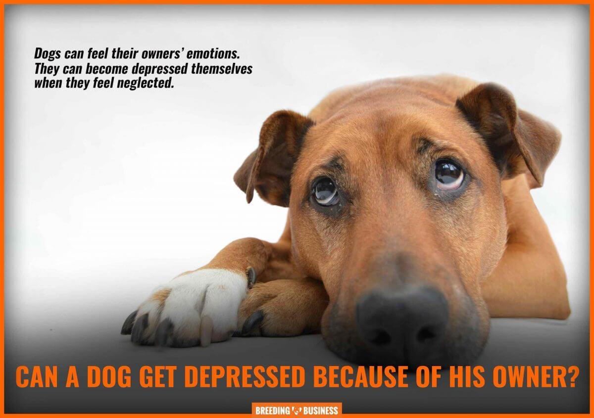 dog depression linked to human depression