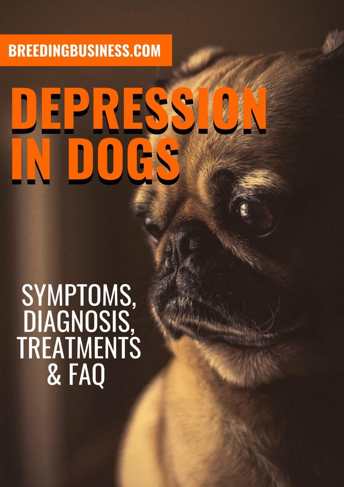 dog depression (poster)