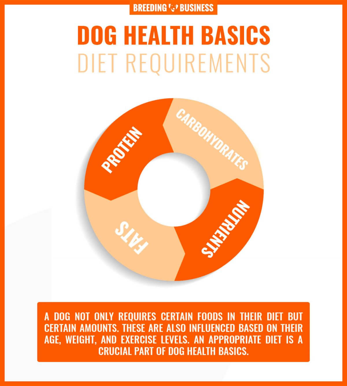 dog diet requirements
