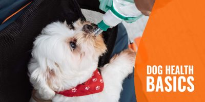 Dog Health Basics – a Simple Guide to Getting the Basics Right!
