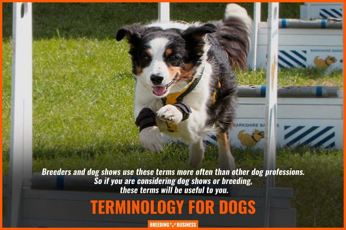 dog show terminology