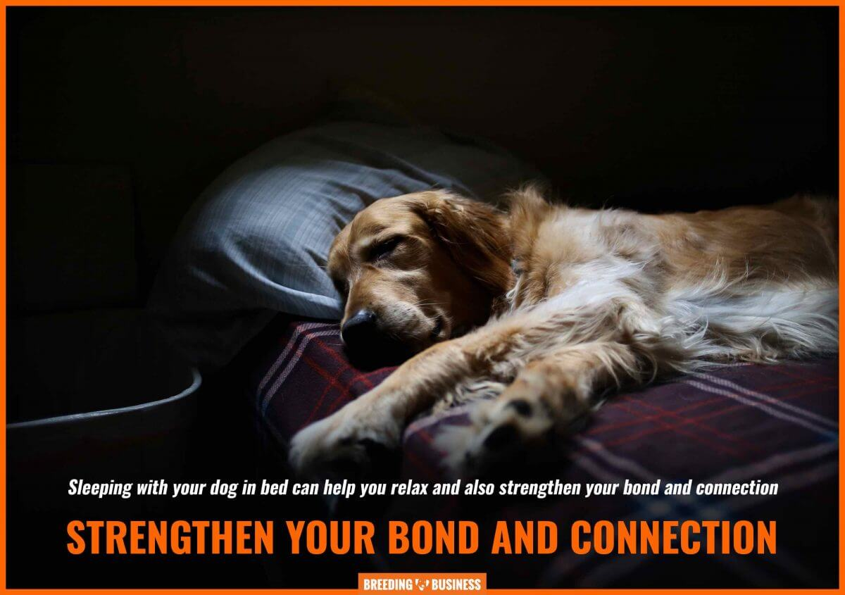 dog sleeping in bed promotes a stronger bond