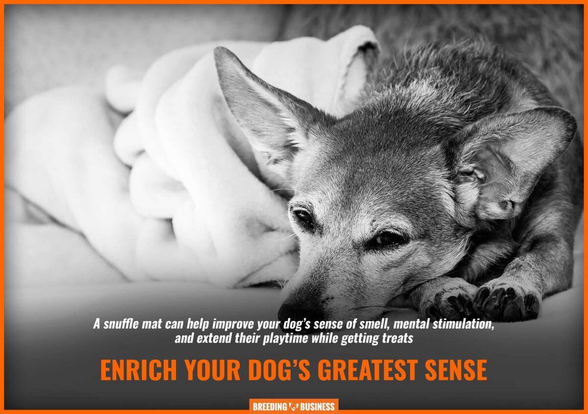 dog snuffle mats improve scent