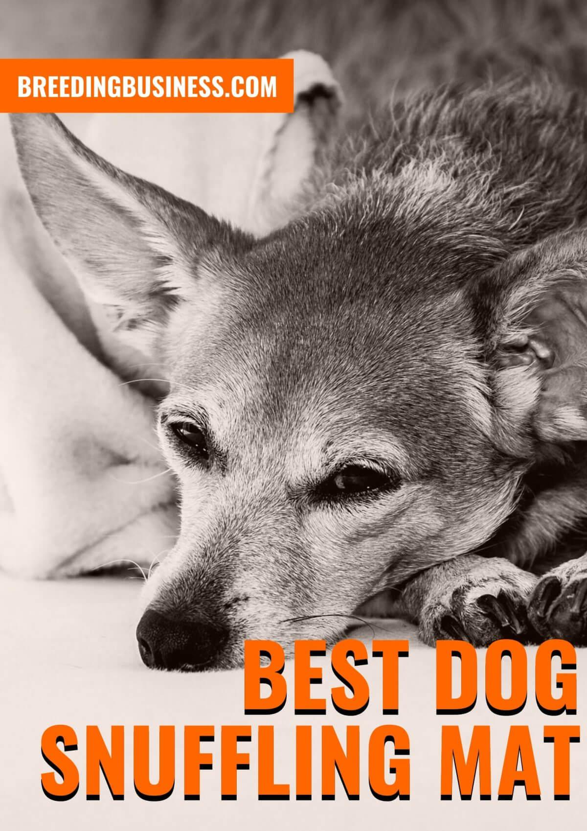Best Dog Snuffling Mats