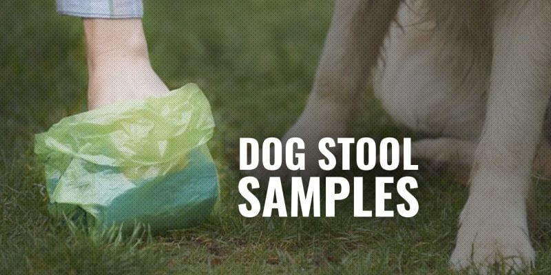 dog stool samples