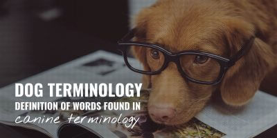 dog and canine terminologydog and canine terminology
