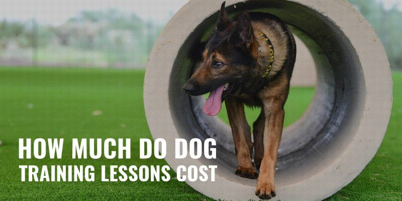 dog training lessons cost and pricing