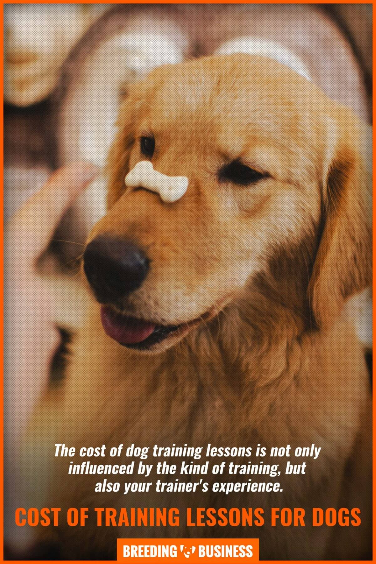 dog training - price of experience