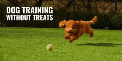 Top 10 Best Dog Training Blogs Zak George Cesar Millan More